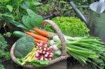 visuel jardin communaux - Associations
